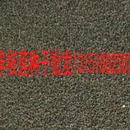 江苏半枝莲种子供应商电话图片