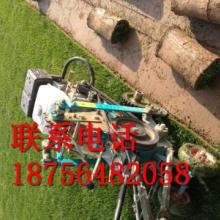 供应安徽草坪厂商-安徽草坪生产-安徽草坪专业生产批发