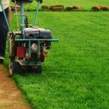 供应早熟禾山西草坪,内蒙草坪,呼和浩特草坪,陕西草坪