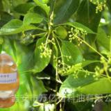 供应用于化妆 保健 医用的厂家直供原料芳樟油
