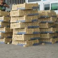 江苏狮头鹅苗最新价格图片