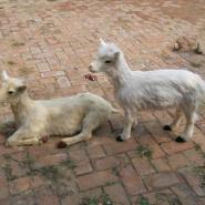 儿童体验馆动物模型图片
