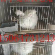 供应长毛兔安徽省价格安徽省哪里有长毛兔养殖场