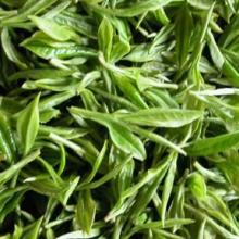 供应绿茶应  修水特产