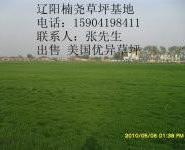 草坪 供应辽阳草坪 批发草坪图片