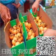 苏州白玉枇杷经销价格图片
