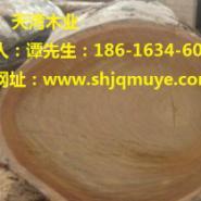 广东非洲柚木王图片图片