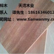 朝阳山樟木价格图片