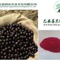 供应用于保健|食品|饮料的巴西莓提取物4:1
