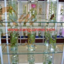 供应陕西矿物标本,标本厂,地质标本,教学标本,生态标本,就在冠美批发