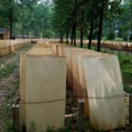 旋切板杨木皮子大量出售杨木单板图片