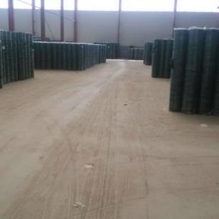 厂家直供库存荷兰网浸塑电焊网图片