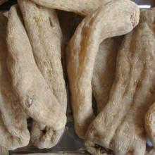 供应用于基地的天麻也可以走进菜市场