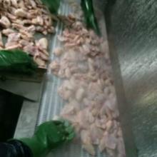 供应水产冷冻食品厂速冻设备
