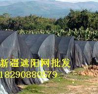 遮阳网防晒网
