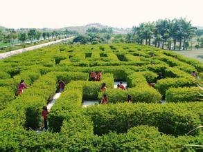 青岛绿化工程案例 【荐】划算的青青岛绿化工程秀