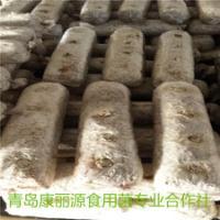 山东青岛康丽源食用菌出口香菇菌棒