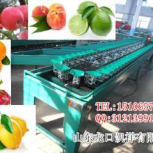 供应凯祥各种型号果蔬分选机水果分级机